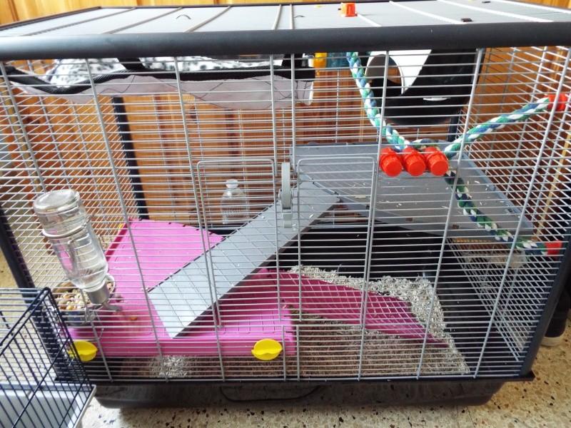 Kevin et la cage de ses rats Dscf2014