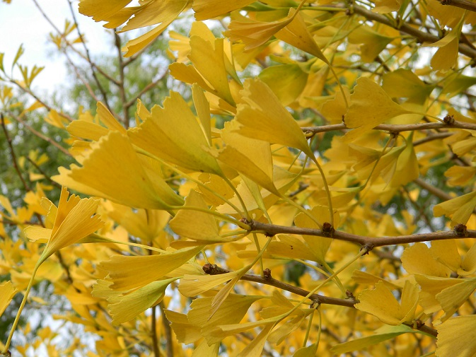 l'automne arrive... - Page 5 Gink210