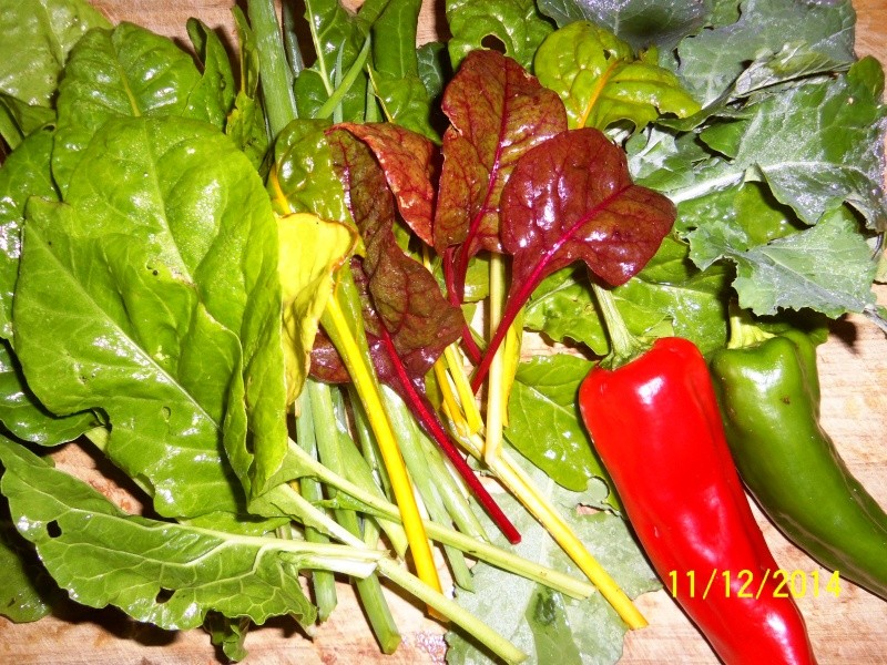 What are you eating from your garden today? - Page 3 Nov_1210