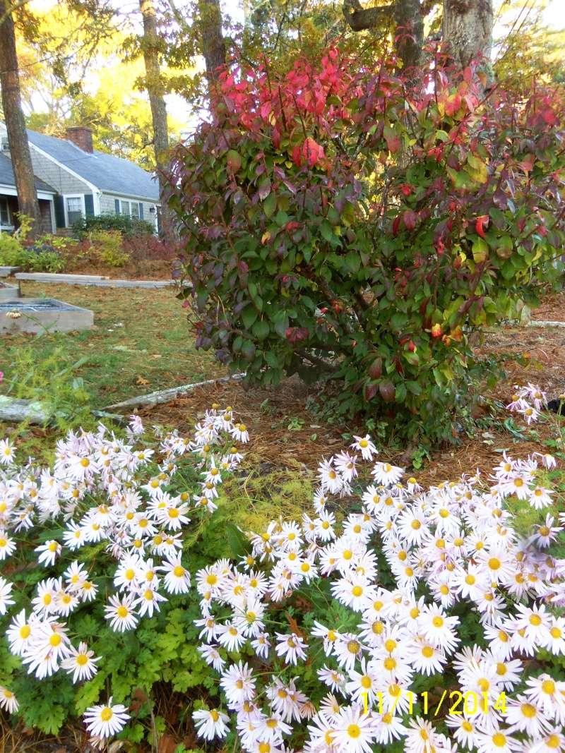 New England, November 2014 - Page 2 Nov_1221