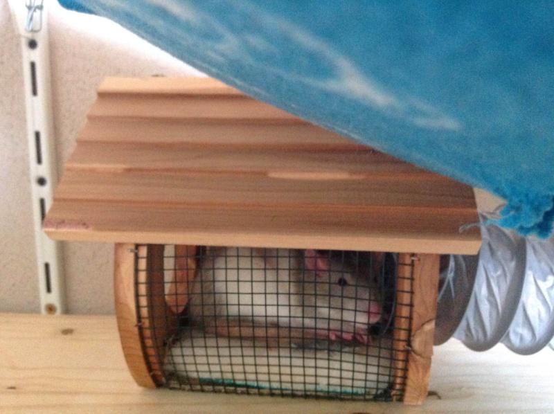 aire de jeu + cage Img_0311