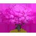 Vous cherchez un arbre ? Venez cliquer ici !!! Redbud12