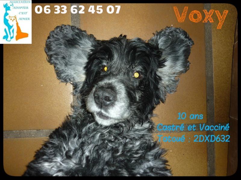 VOXY cocker anglais (inscrit au lof), 10 ans Acavox11