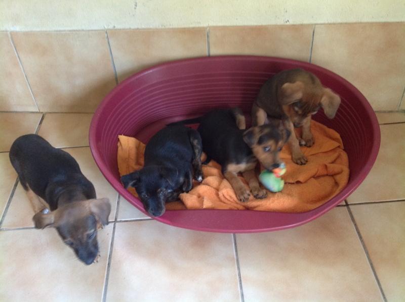 GINA, PABLO, LIPSA, LAÏKA et YSSA (à Hermeray) Photo213