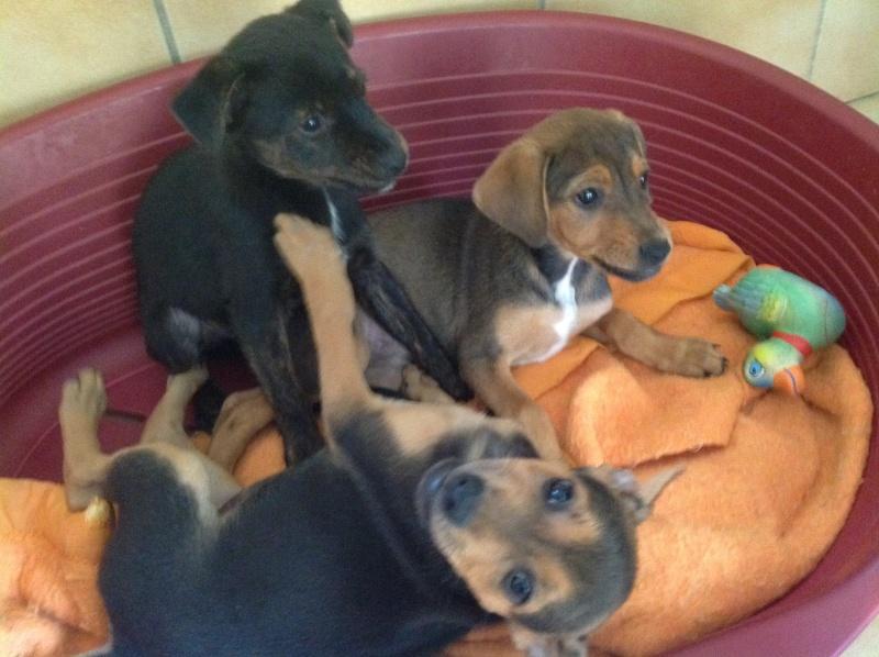 GINA, PABLO, LIPSA, LAÏKA et YSSA (à Hermeray) Photo_26