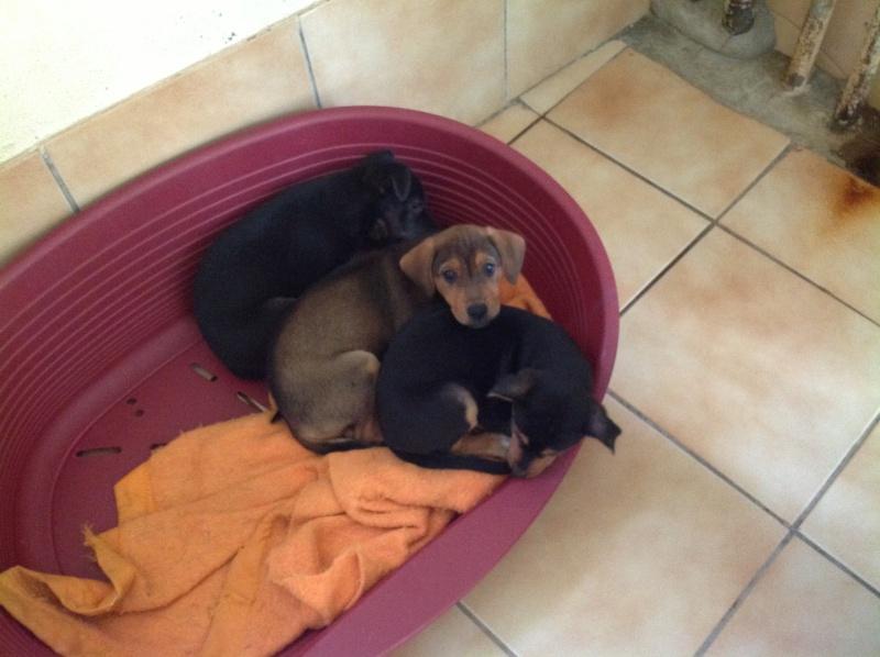 GINA, PABLO, LIPSA, LAÏKA et YSSA (à Hermeray) Photo_27