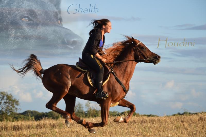 cavalière du calvados Galop_10