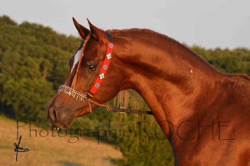 cavalière du calvados Houdi_10