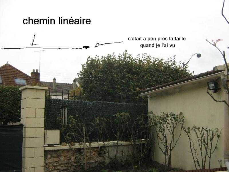 2014: le 17/07 à 16h - Une soucoupe volante - la ferté sous jouarre - Seine-et-Marne (dép.77) Soucou10