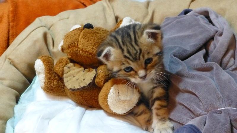 Arrivée de mon petit chaton - Page 2 Latest10