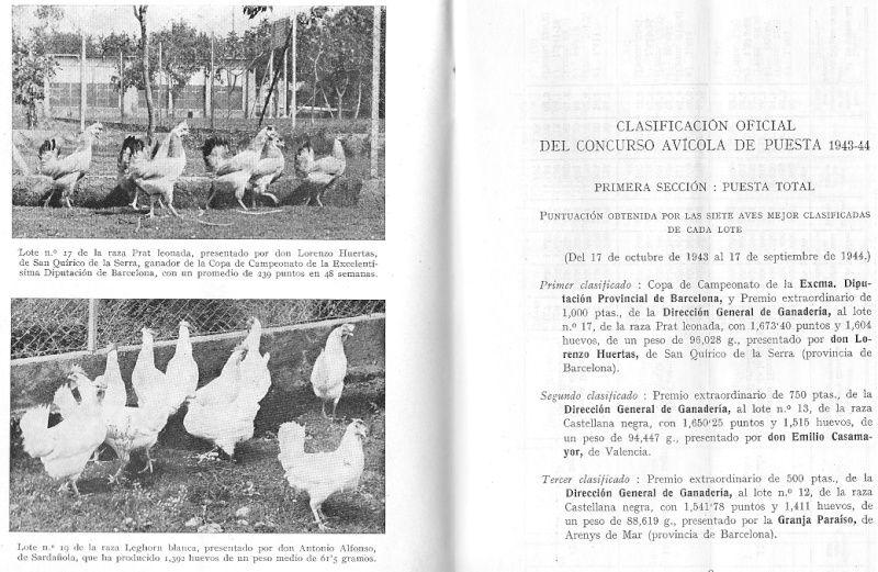 La moda en las gallinas Concur12