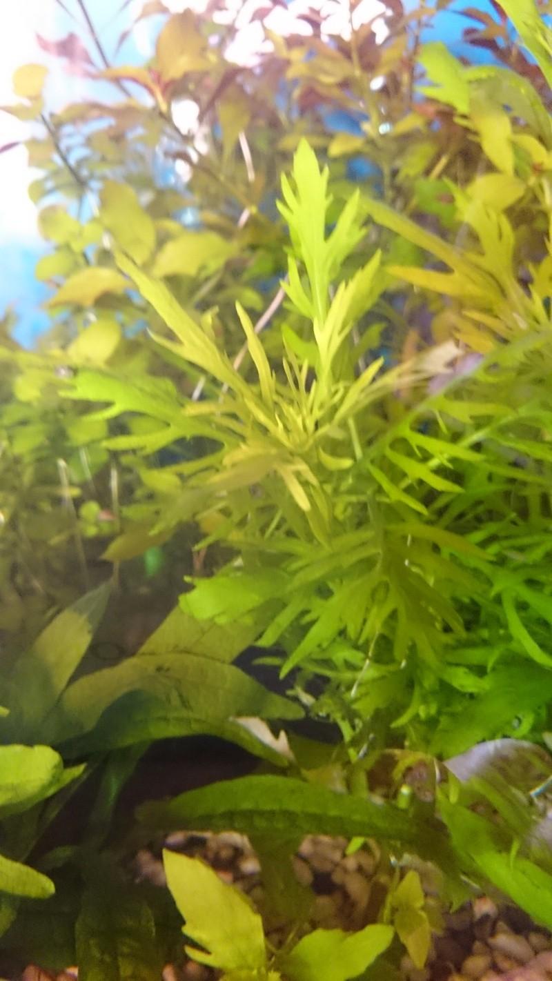 Quelles espèces de plantes? 2014-112