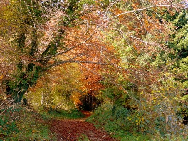 l'automne arrive... - Page 8 P1280510
