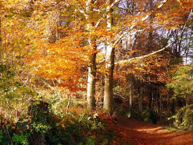 l'automne arrive... - Page 8 P1280511
