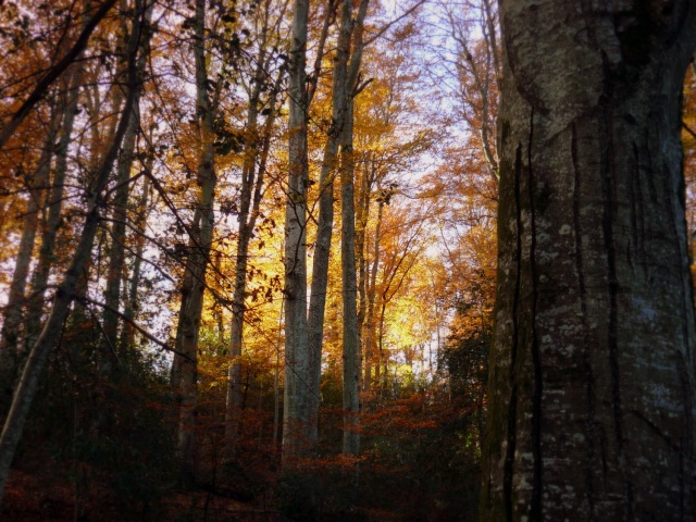 l'automne arrive... - Page 8 P1280512