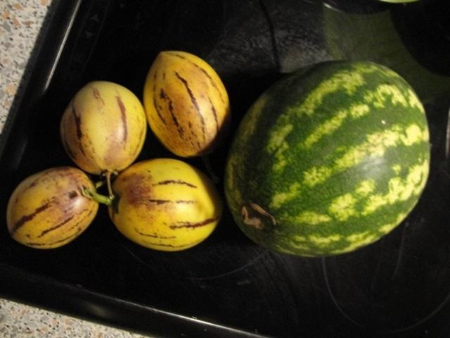le poire melon Dsc08113