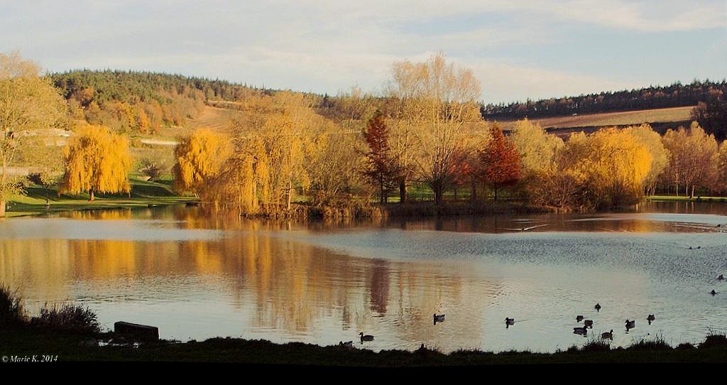 Au petite lac, des arbres, des couleurs. 15737010