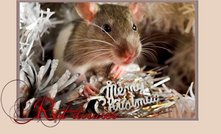 Les Rat-dieuses