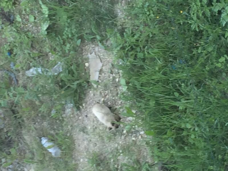sos multitudes de chats sur chatillon dans le 92 Siamoi10
