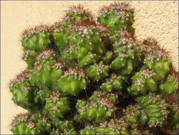 Avis et Conseils pour bien s'équiper et débuter... Cactus10