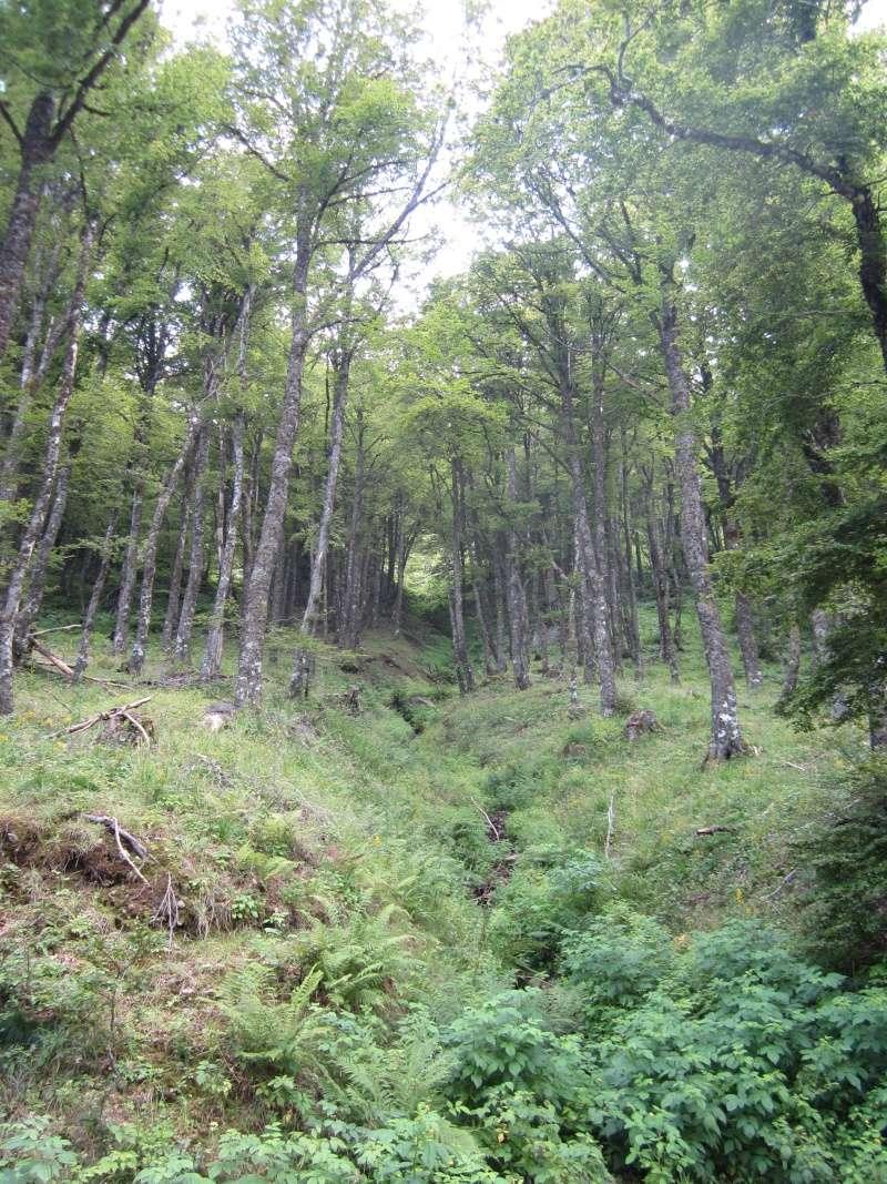 Le bois de la Bragouse Fabien65