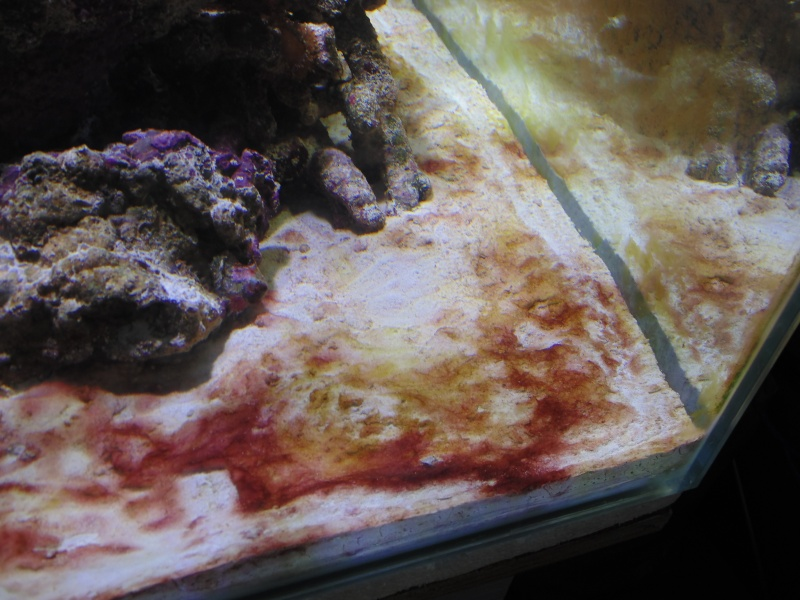 mon nouvel aquarium  - Page 4 Dsc05713