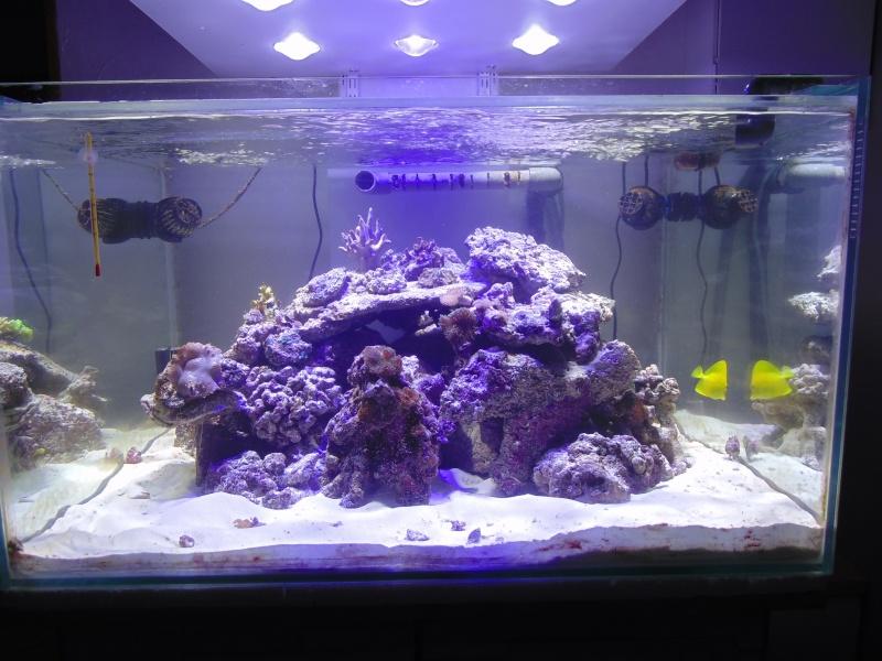 mon nouvel aquarium  - Page 5 Dsc05714