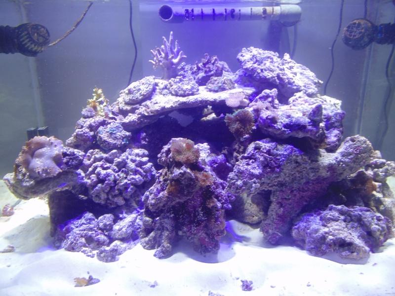mon nouvel aquarium  - Page 5 Dsc05715