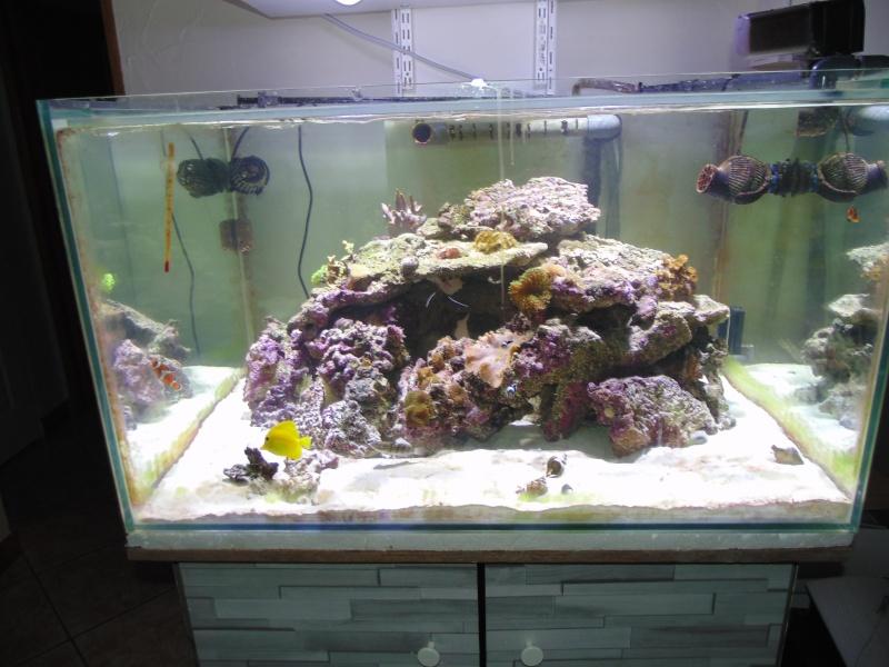 mon nouvel aquarium  - Page 6 Dsc05810