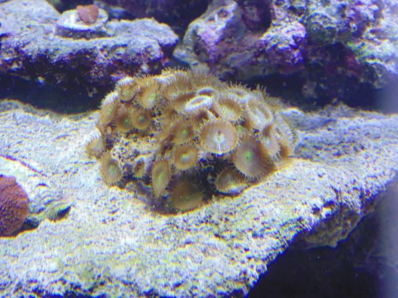 mon nouvel aquarium  - Page 6 Dsc05812