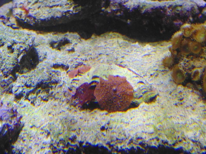 mon nouvel aquarium  - Page 6 Dsc05814