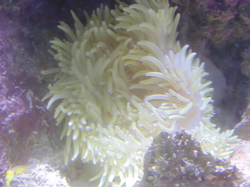 mon nouvel aquarium  - Page 6 Dsc05818