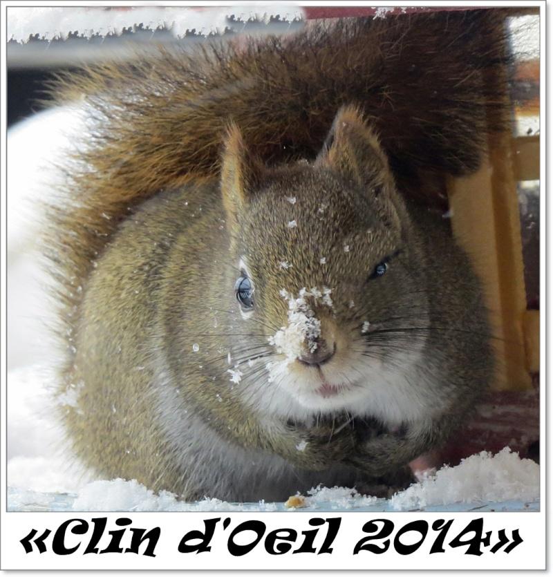 Clin d'œil 2014 d'un Écureuil roux  Clin_d10