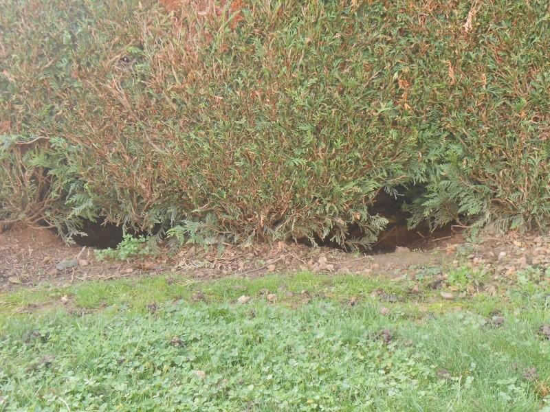 Les cairns racontent leur vie à leurs copains en novembre 2014 - Page 6 Dscn1316
