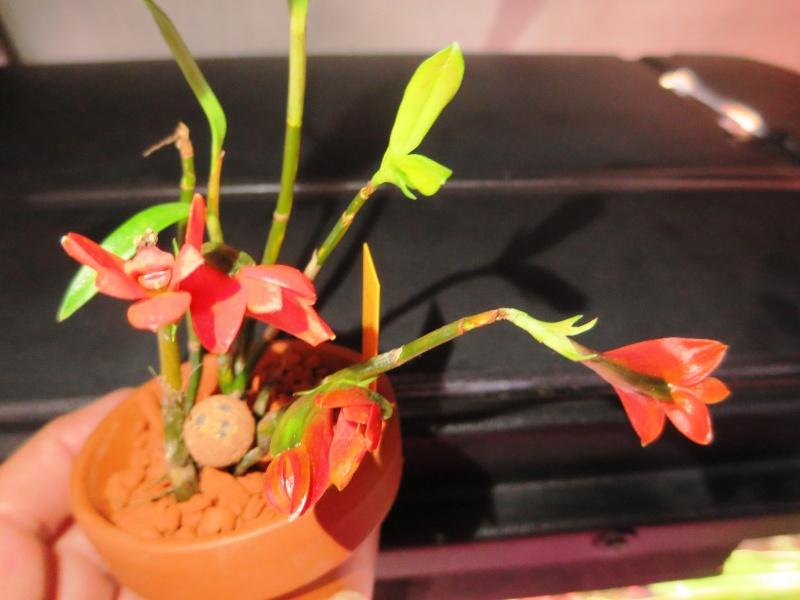 Umbau kleines Aquarium zum Orchidarium 2014-110