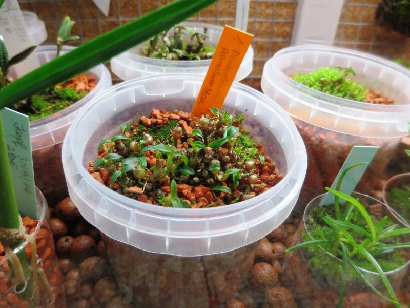 Umbau kleines Aquarium zum Orchidarium 2014-114