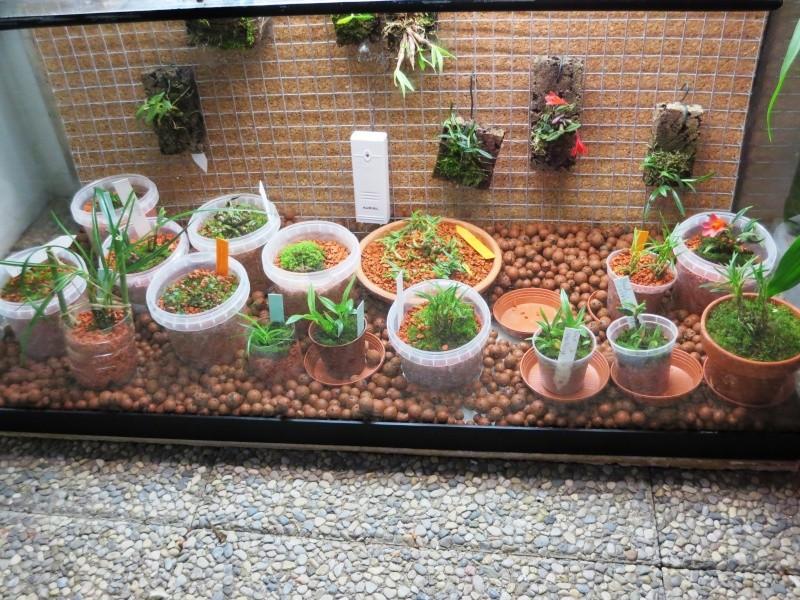 Umbau Kleines Aquarium Zum Orchidarium