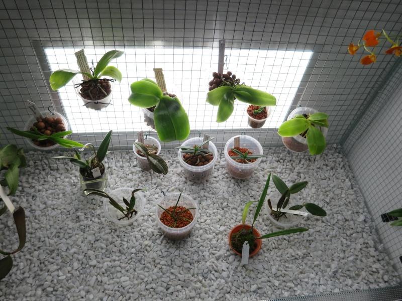 Bau meines großen Orchidarium 20141113