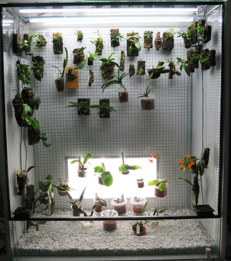 Bau meines großen Orchidarium 20141114