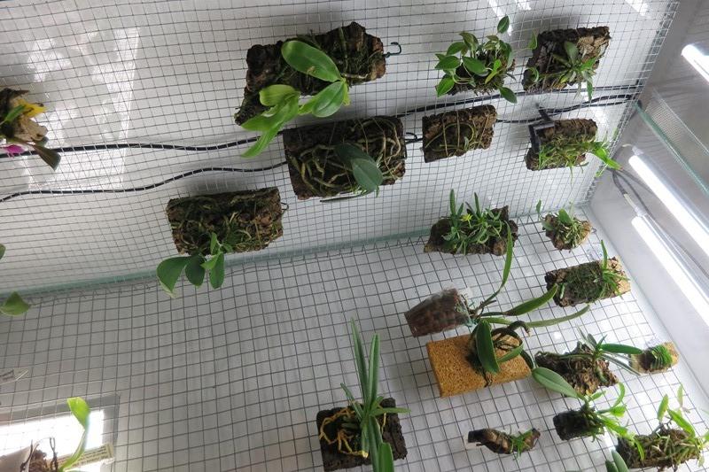 Bau meines großen Orchidarium 20141116