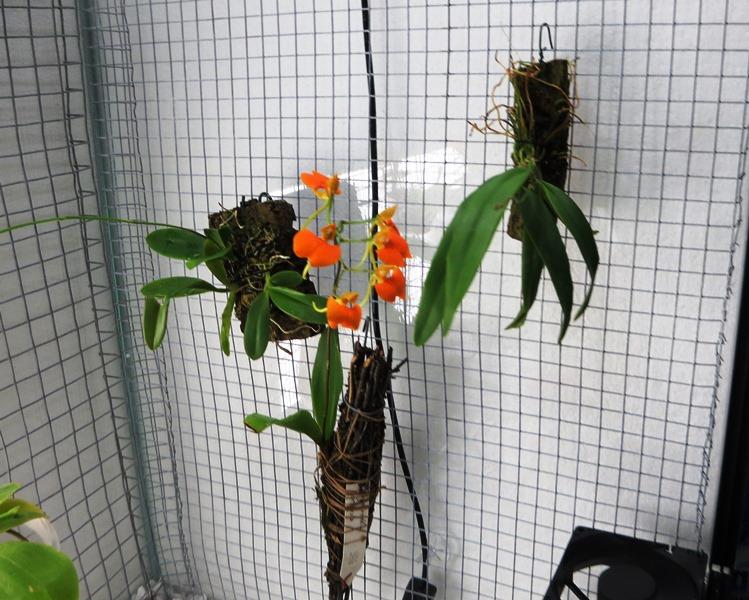 Bau meines großen Orchidarium 20141120