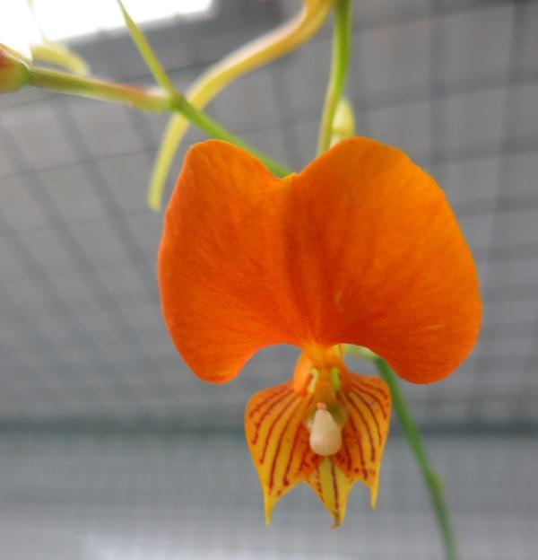 Bau meines großen Orchidarium 20141124