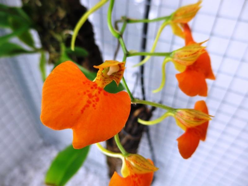 Bau meines großen Orchidarium 20141126