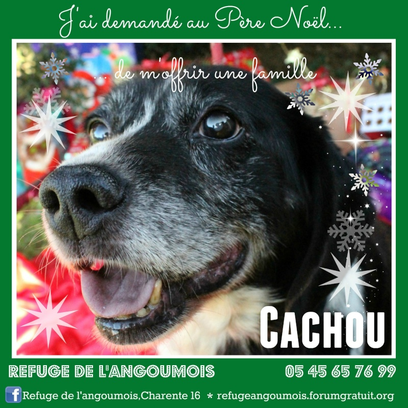 Calendrier de l'Avent 2014 Cachou10