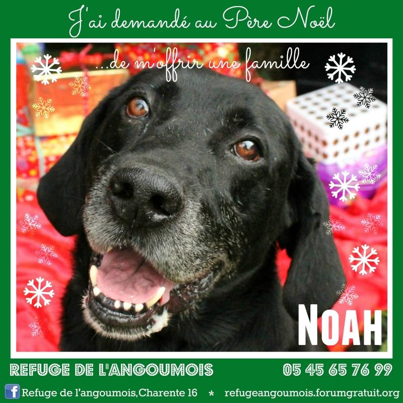Calendrier de l'Avent 2014 Noah_f11