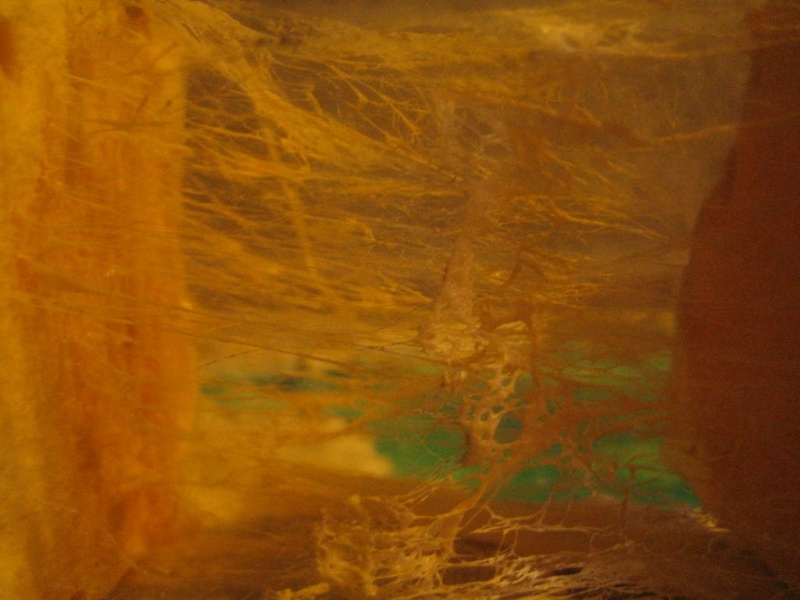 [ TUTO ] Toiles d'araignées Toile10
