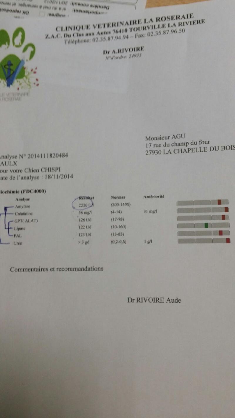 Chispi mâle malamute/husky de 8 ans a passé sa vie attaché (Alava, Espagne ) - Page 9 20141110