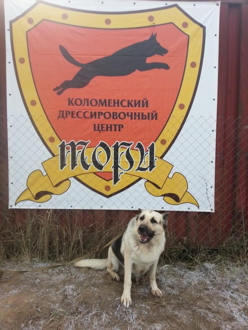 ВОСТОЧНО-ЕВРОПЕЙСКАЯ ОВЧАРКА АМАНАУЗ ЛАРИНА - Страница 7 20141144