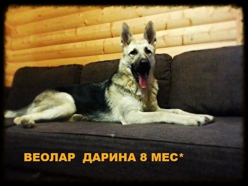 ВЕОЛАР ДАРИНА Editor10