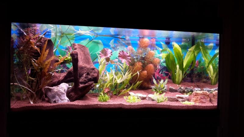 Aquarium 180 Litres 2014-111